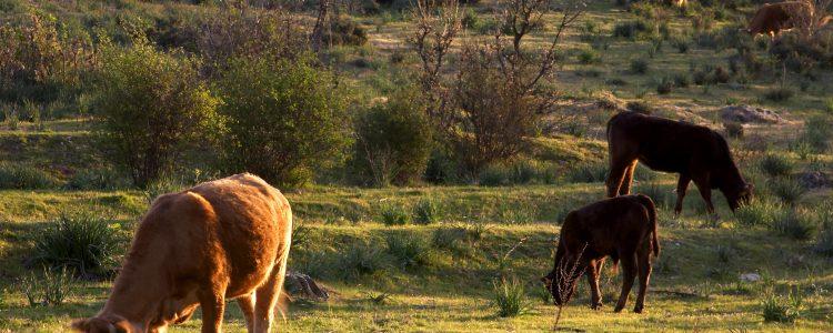 La Sierra del Rincón recupera su paisaje tradicional en sus vías pecuarias.<span class=