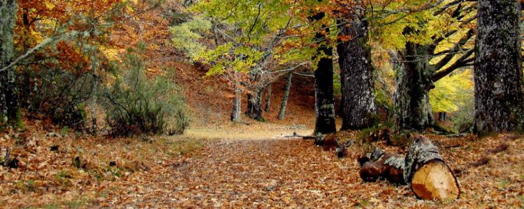 Los colores otoñales inundan los bosques, en @CincoDiasCom<span class=