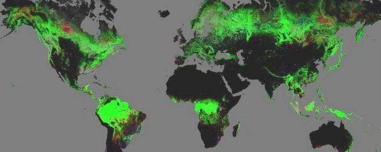 El primer mapa detallado del cambio forestal mundial