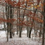 Invierno en la #SierraNorteDeMadrid