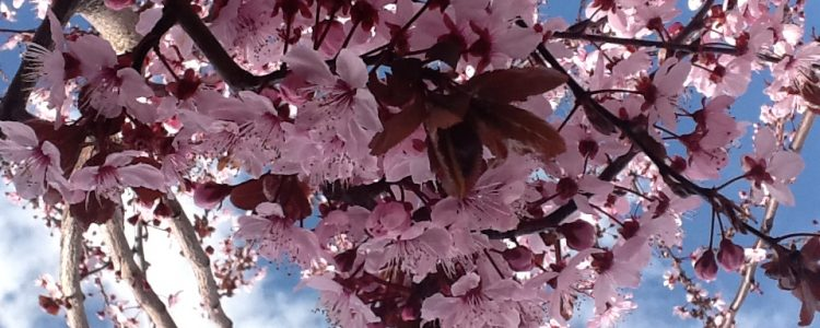 Empieza la Primavera en la sierra Norte de Madrid<span class=