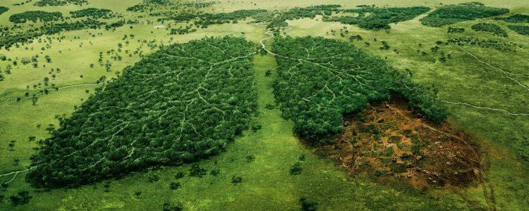 Científicos llaman la atención sobre la deforestación al Congreso del Clima de la ONU<span class=