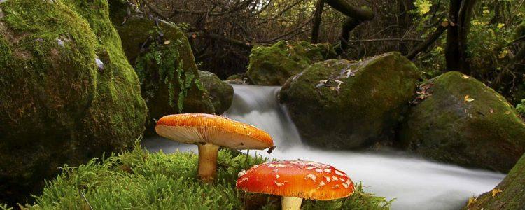 Lanzan una campaña para concienciar sobre la importancia de preservar la biodiversidad<span class=