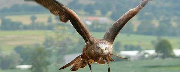 Sendas ornitológicas guiadas por la Sierra Norte de Madrid<span class=