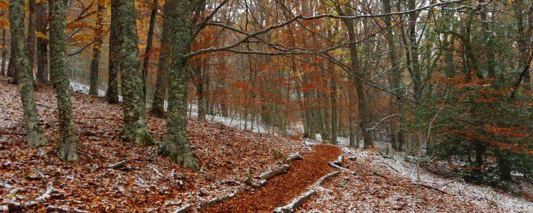 El Destino Rural Sierra Norte De Madrid se consolida como el más buscado.<span class=