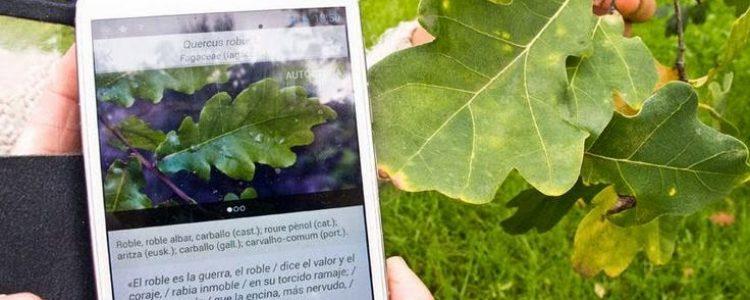 Arbolapp, la App gratuita que guía al usuario para que aprenda a reconocer especies silvestres.
