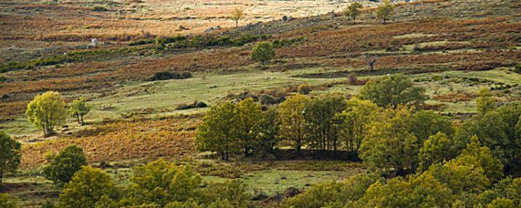 Aprobado el Proyecto de Ley de Patrimonio Natural y de la Biodiversidad