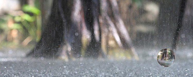 Asombroso estudio del olor a lluvia o líquido que fluye por las venas de los dioses.<span class=