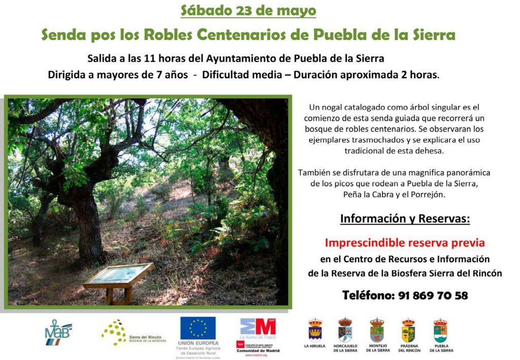 Senda de los Robles Centenarios de Puebla de la Sierra