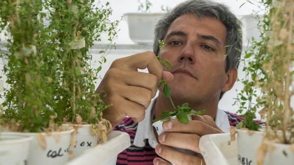 crecimiento de las plantas