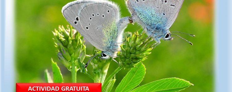 Mariposas en el Hayedo, Indicadores de Biodiversidad<span class=