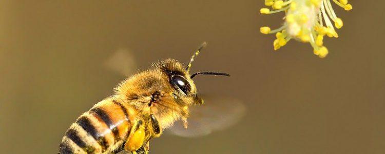 Un mundo sin abejorros…