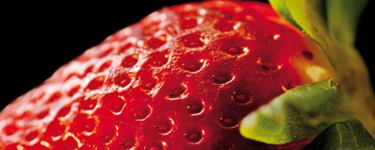 Un proyecto analizará el origen de la fresa silvestre para localizar genes de sabor y calidad.<span class=