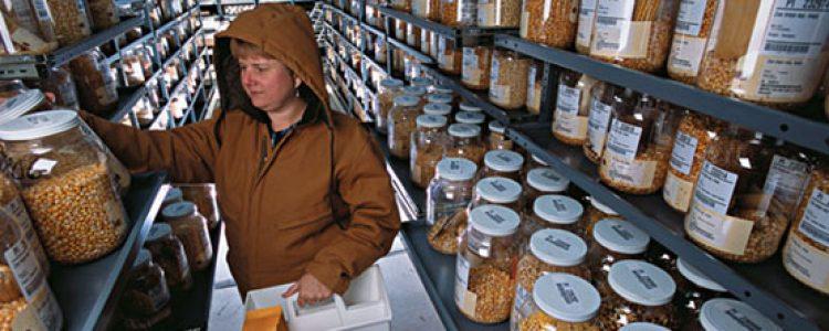 Banco de semillas: Un arca de Noé para las plantas<span class=