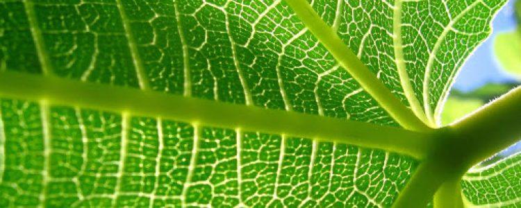 El aumento de las temperaturas durante el día adelanta la salida de las hojas<span class=