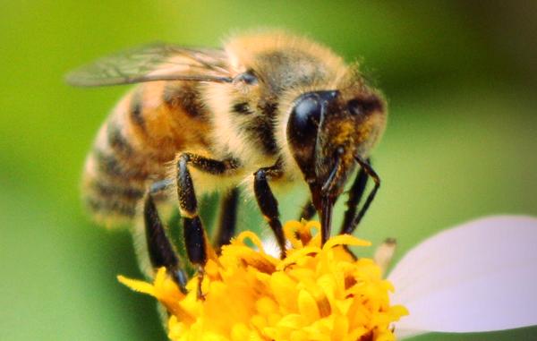 Un mundo sin abejorros