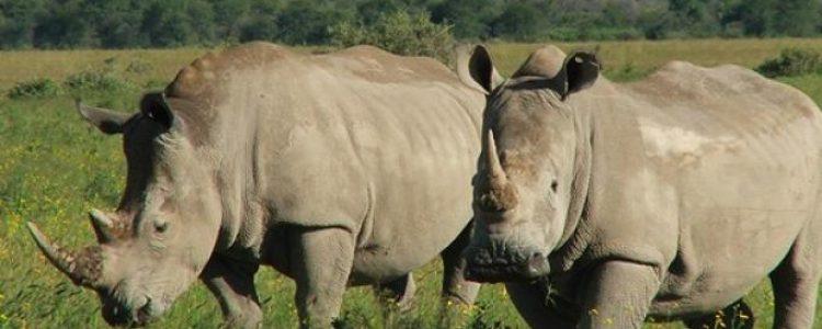 Continúa creciendo la Lista Roja de especies amenazadas<span class=