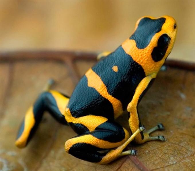 lista roja especies amenazadas