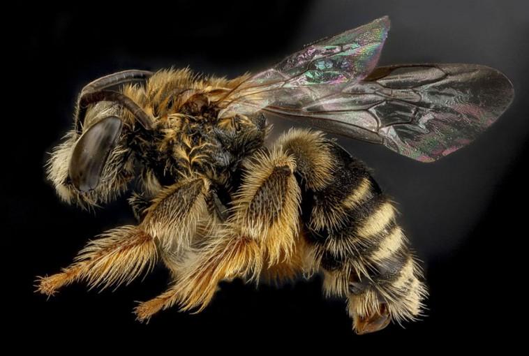Los insectos corroboran que el cambio climático ya está aquí