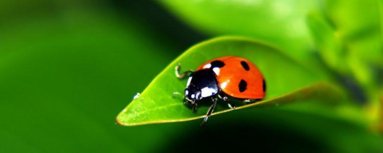 Los insectos corroboran que el cambio climático ya está aquí<span class=