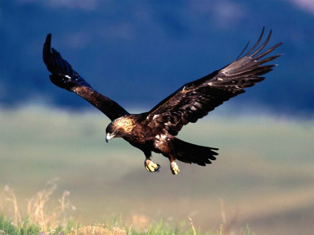 Adler-Imperial-Iberica-Spanien