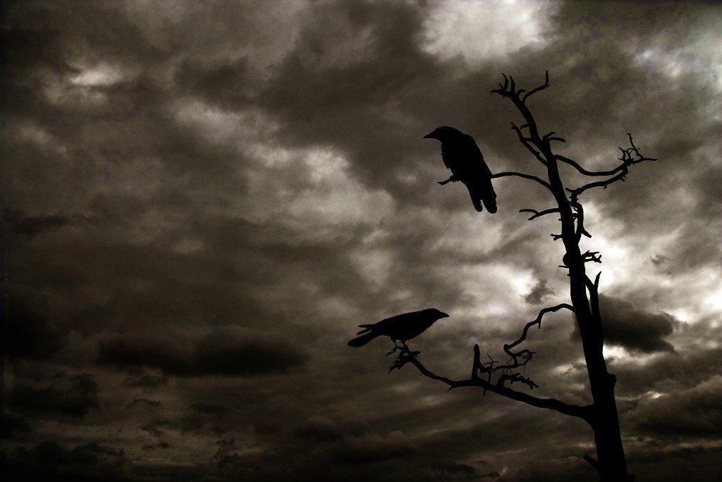 Los cuervos aprenden de la muerte